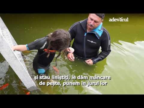 Terapie sub apă