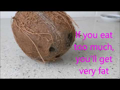 Coconut Song! (with lyrics)