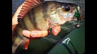 Ловля окуня летом - видео с рыбалки 2015