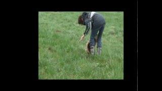 Początki pracy psów na warsztatach tropienia użytkowego z Marią Kuncewicz i KGT