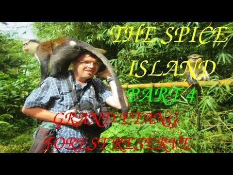 The Spice Island- Part 4/4 (EXPLORING THE RAINFOREST)