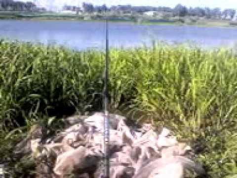 ловля леща у деревни романово кимрский район