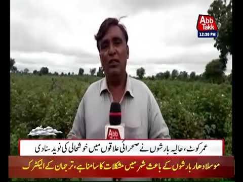 Rain Brings Good News for Crops in Umerkot