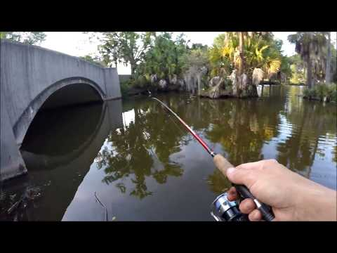 Bluegills by Morning Call at City Park New Orleans