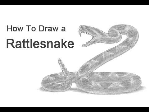 How to Draw a Snake (Diamondback Rattlesnake) - YouTube