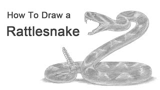 How to Draw a Snake (Diamondback Rattlesnake)