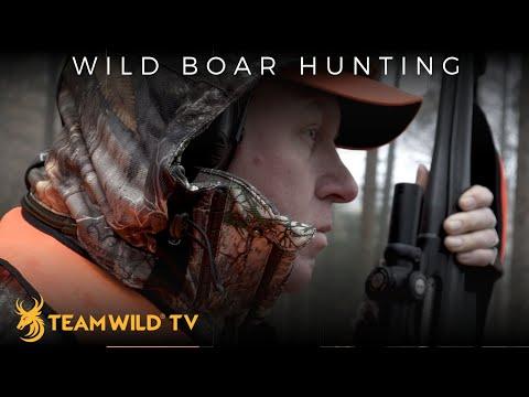 Hunting Driven Wild Boar In Germany