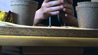 Planting Jalapeno Seeds In Peat Pots / Transplant Update