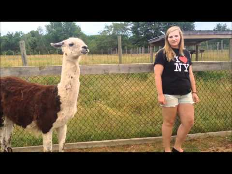 Lama's are too exciting for words