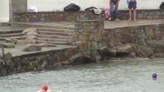 Swimmers In Dun Laoghaire Harbour Below The James Joyce Tower
