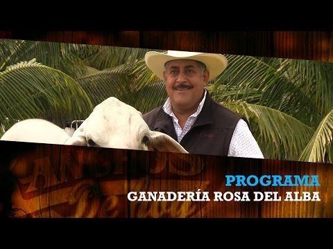 BRAHMAN.... GANADERIA ROSA DEL ALBA