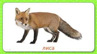 Развивающие карточки Домана для детей Дикие животные