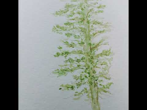 How To Paint Evergreen Tree, Healing Watercolor Painting Demonstration For Beginners and Learner