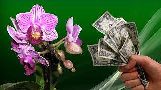 видео Выбор и приобретение комнатных растений