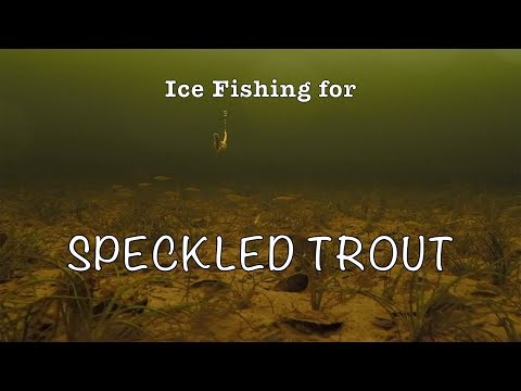 Ice Fishing For Speckled Trout In Newfoundland