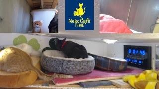 Neko Café TiME(京都JR稲荷駅そば) [LIVE] thumbnail