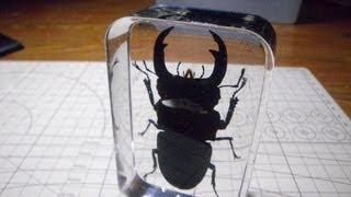 オオクワガタ樹脂標本 ぺやんぐ製作記 Let's make the resin specimens of stag beetle