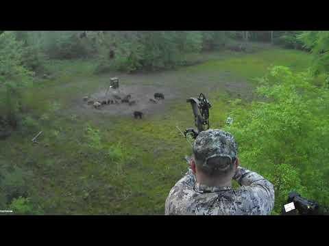 Bowhunting Hogs in Ga                                                                     4/15/2021