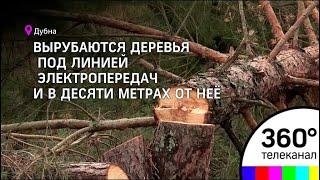 В зоне охранной территории «Ратминская стрелка» вырубили 50 деревьев