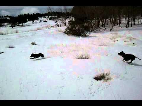 Morgan&thor sulla neve nicolosi