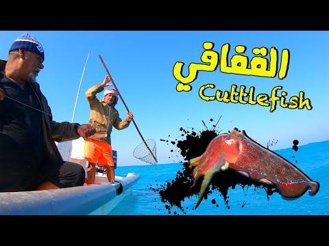 Cuttelfish Fishing in Bahrain - صيد الخثاثيق بطريقة القفافي العجيبه بالبحرين