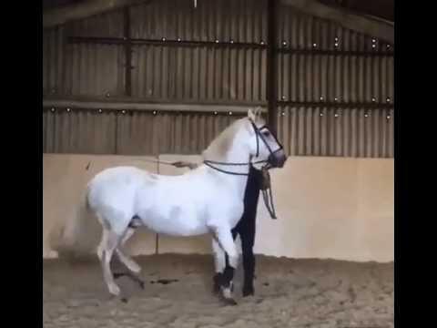 Как высоко может прыгать лошадь