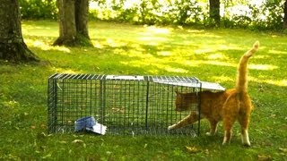 Advantek Live Trap For Cat, Raccoon, Opossum, And Armadillo Value Pack Test