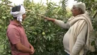 Video Amrood ki Kheti-{Kahani Safalta ki} (Doordarshan Kendra Varanasi (DDK Vns) download MP3, 3GP, MP4, WEBM, AVI, FLV Juli 2018