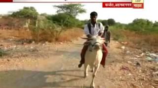 स्पेशल रिपोर्ट : अहमदनगर : 44 रुपये नसल्यानं त्यानं गायीवरुन परिक्षाकेंद्र गाठलं