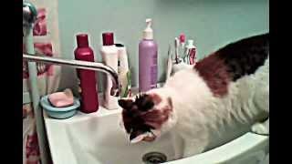 Кошка и вода.