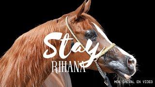 Stay Rihanna  - Pur Sang Arabe