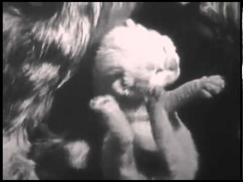 The Private Life of a Cat_ Documentary Film (1944)