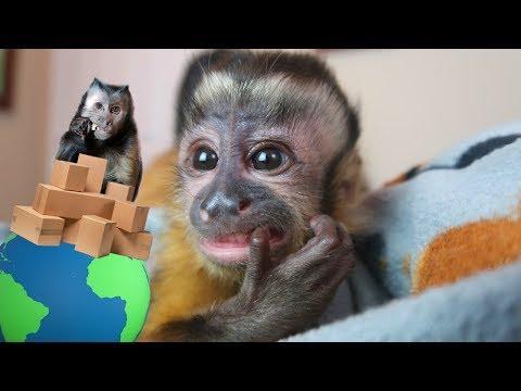 Baby Monkey Mail Vlog!