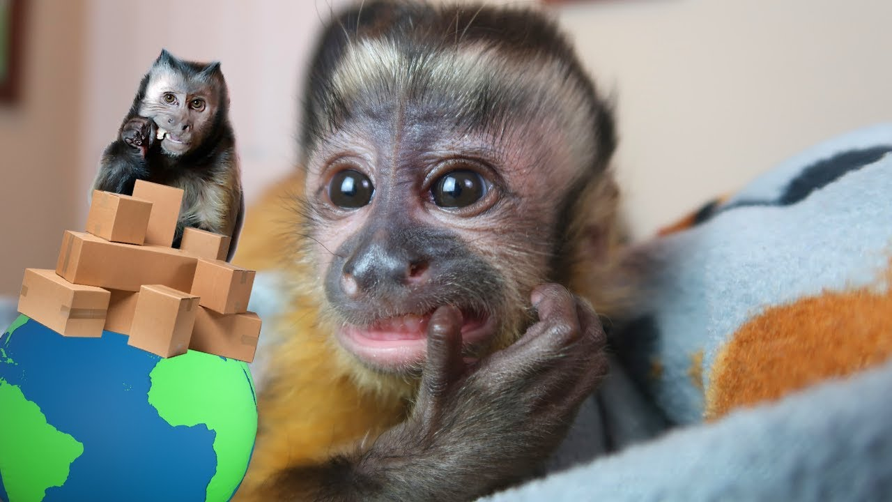 baby-monkey-mail-vlog