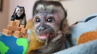 Baby Monkey Mail Vlog!