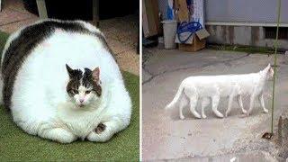 5 Gatos Impresionantes Que NO Creerás Que Existen
