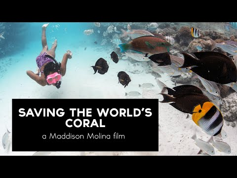 Video Of The Week | Saving the World's Coral (2021)