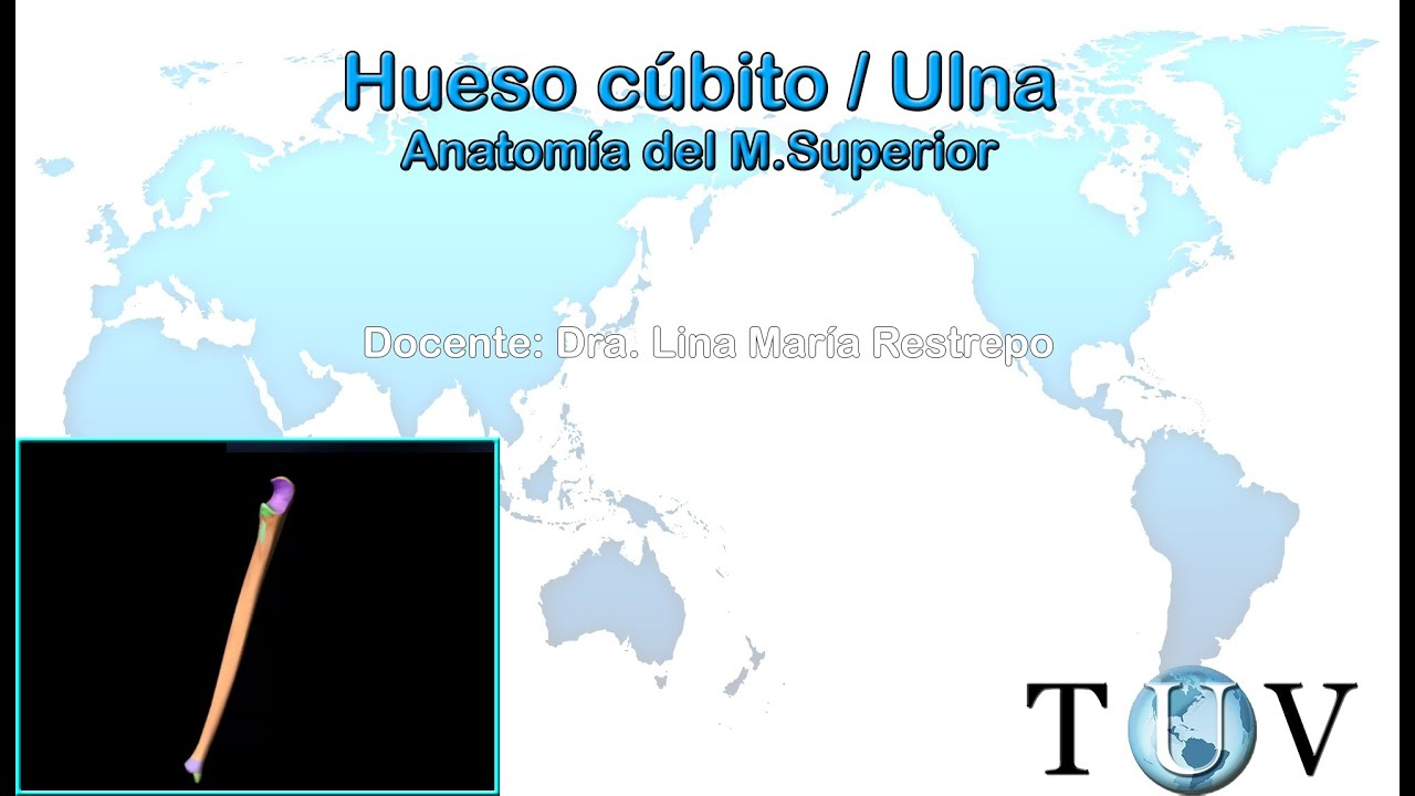 Huesos del miembro superior - Hueso cúbito (Ulna) - YouTube