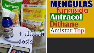 Download lagu Mengulas Fungisida Antracol, Dithane dan Amistartop Untuk Sayuran Buah