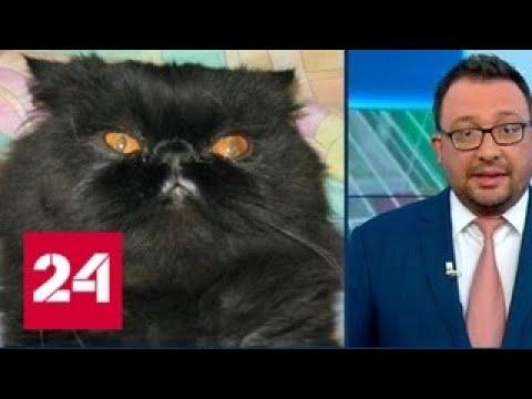 Кота Сергея Скрипаля сожгли огнеметом - Россия 24