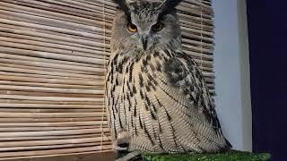 "Просто сова сидит на жопке и говорит ""угу"". Мило."
