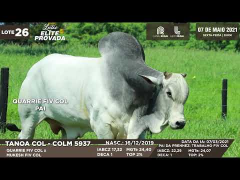 LOTE 26   COLM 5937