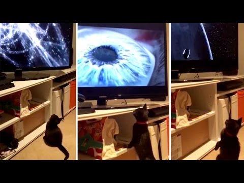 Curious Cat Engrossed In Universe Documentary