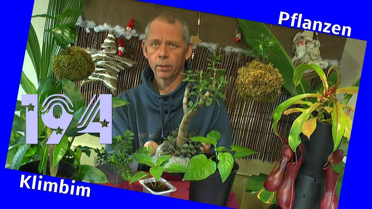 Paprika im Winter, umtopfen der Sämlinge YouTube ~ 23202556_Sukkulenten Im Winter Umtopfen
