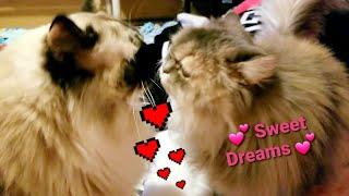 💕 SWEET DREAMS 💕 WE LOVE YOU 💕