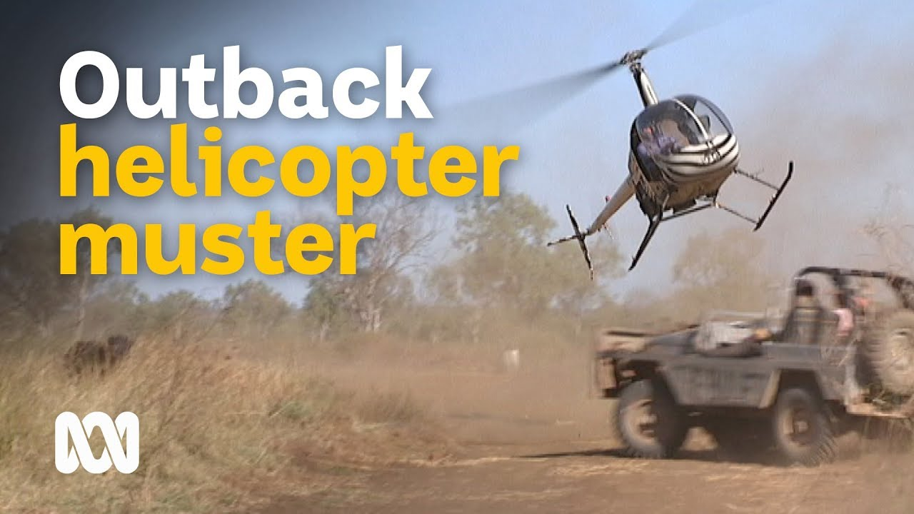 Download Helicopter mustering feral buffalo in outback Australia 🐃🚁🤠 | Wild Rides Ep 1 | ABC Australia