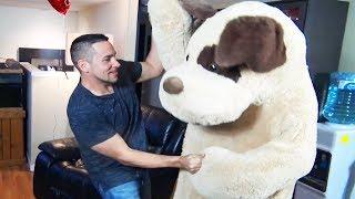 Anniversary Stuffed Animal Revenge Prank On Wife