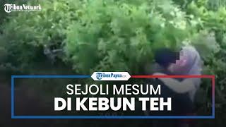 Video Sejoli Ciuman Di Kebun Teh Kemuning Tersebar Setelah Teknisi CCTV Lakukan Perawatan Alat