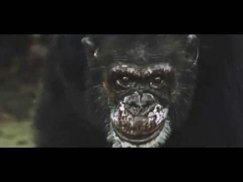 AWS - Te is félsz [Hivatalos videó 2015]