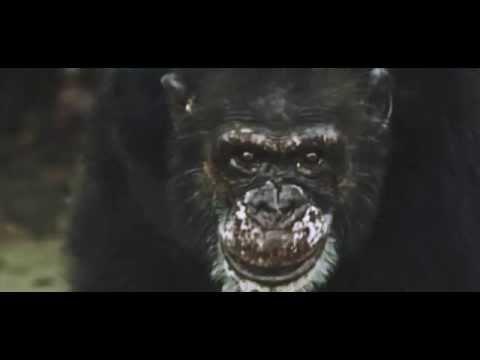 AWS - Te is félsz [Hivatalos videó 2015] mp3